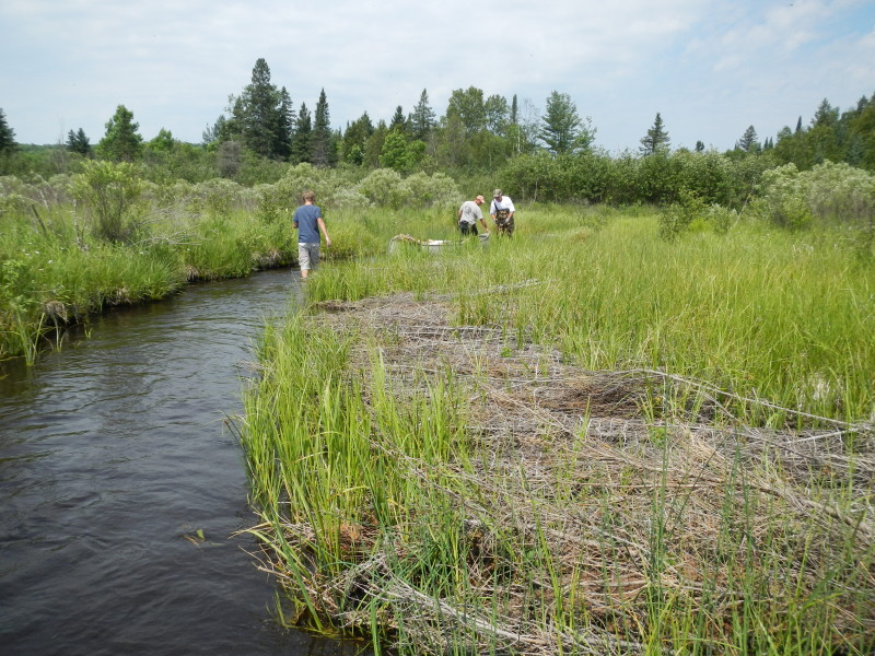 Canoe moves upstream past prior work and then to carry bundles to work areas