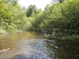 Tag Alders providing to much stream side canopy