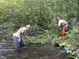 Removing tag Alders in stream help decrease current drag