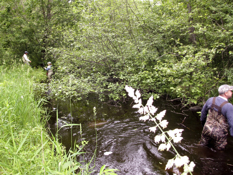 Making progress on clearing off the Alder