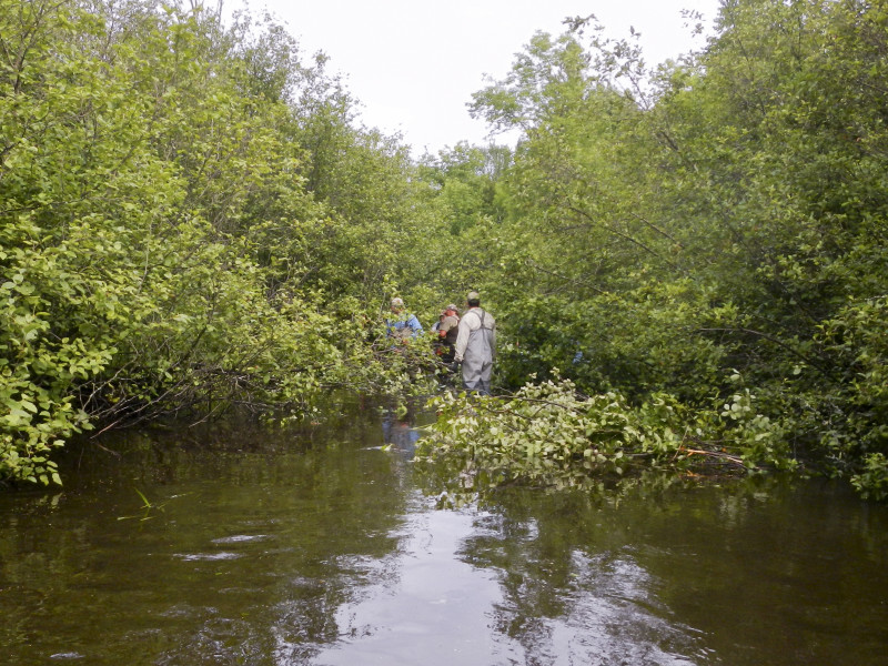 Section of North Branch of the Oconto before brushing