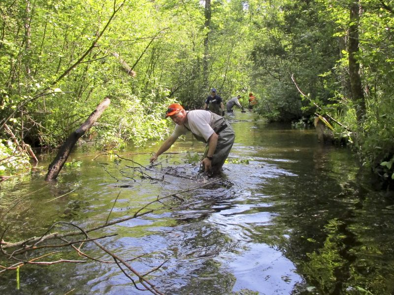 Pat Klatt floats cut Alder down stream an into place