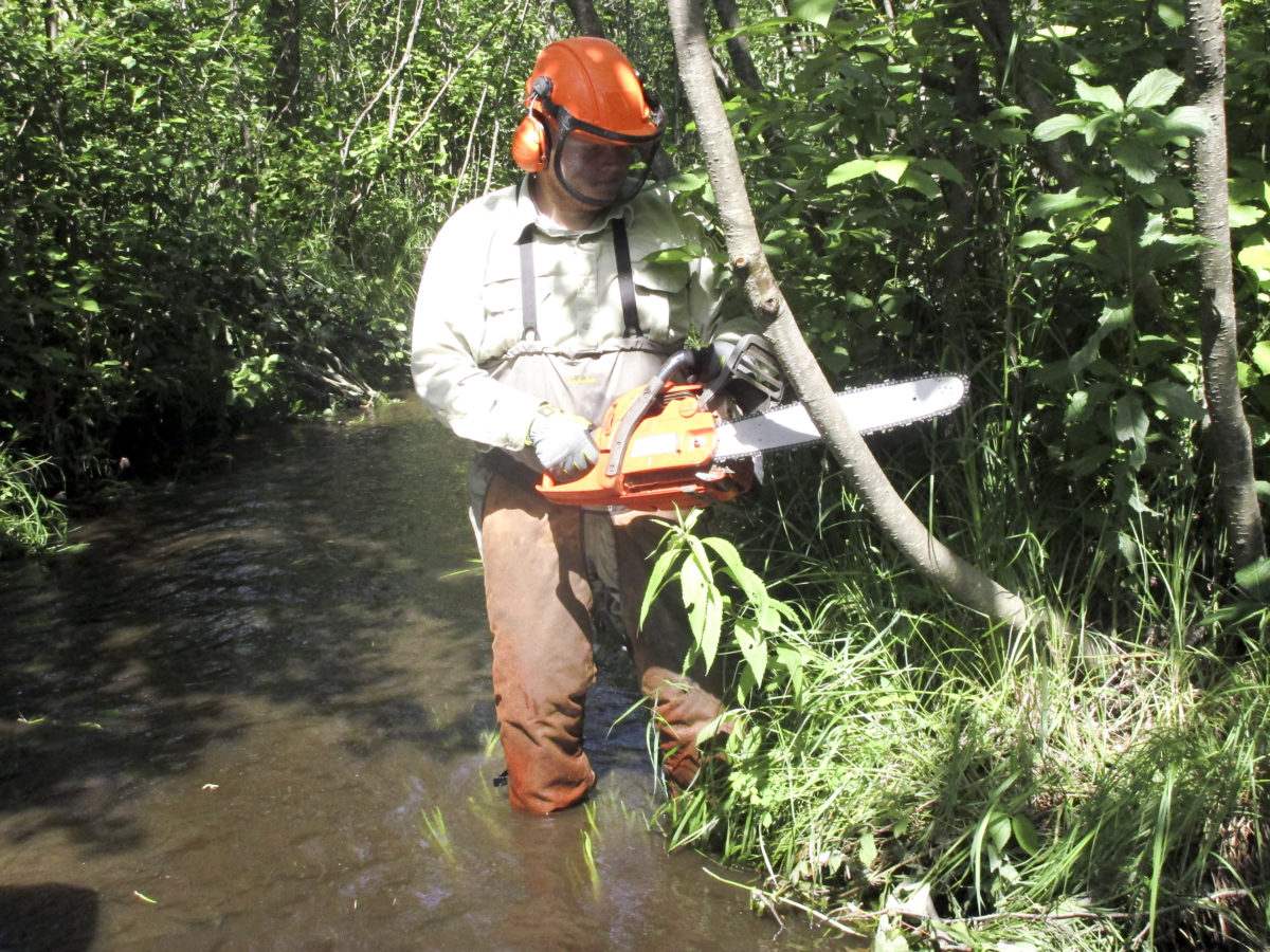 Thomas Schults cutting tag Alder upstream
