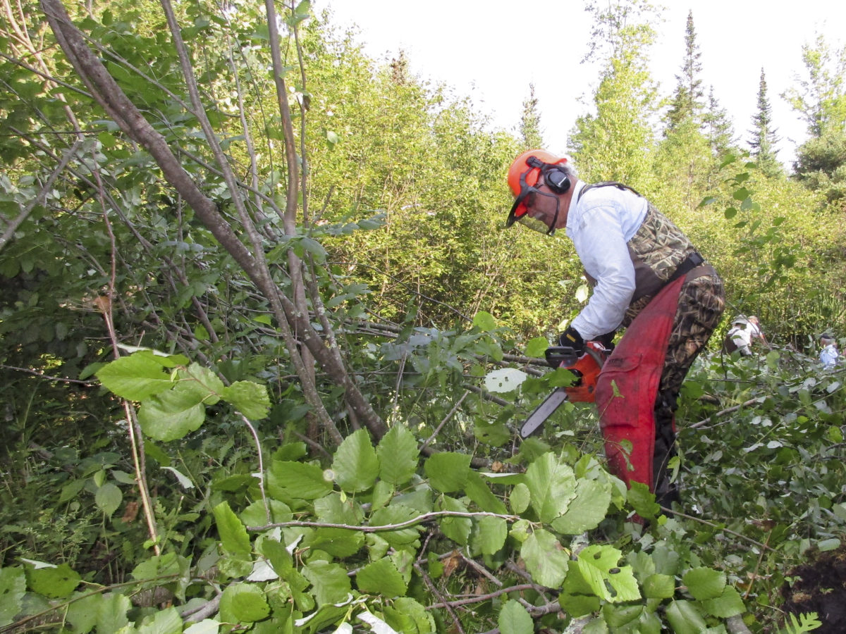 Doug Seidl working the chainsaw in cutting Alder