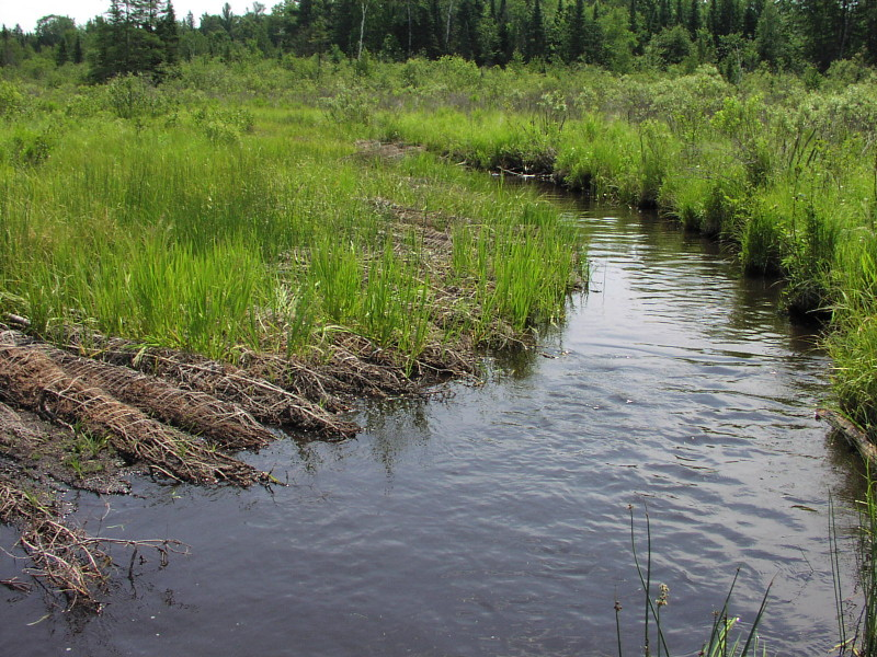 Stream improvement results of prior years conifer bundle placement