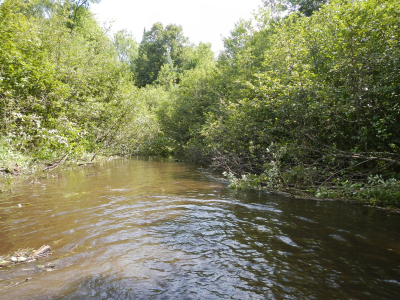River view before brushing of tag alders