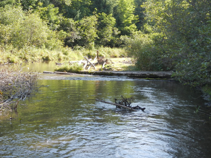 Results: root wad in place with log cover downstream